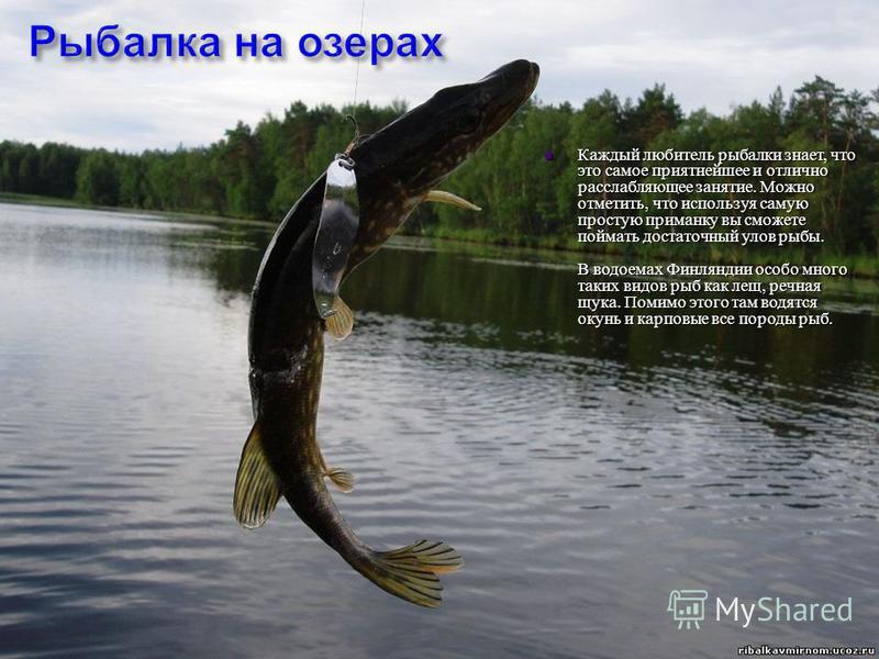 Каждый любитель рыбалки знает, что это самое приятнейшее и отлично расслабляющее занятие. Можно отметить, что используя самую простую приманку вы сможете поймать достаточный улов рыбы. В водоемах Финляндии особо много таких видов рыб как лещ, речная