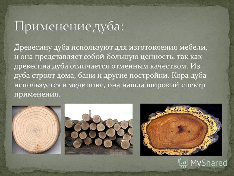 Древесину дуба используют для изготовления мебели, и она представляет собой большую ценность, так как древесина дуба отличается отменным качеством. Из дуба строят дома, бани и другие постройки. Кора дуба используется в медицине, она нашла широкий спе