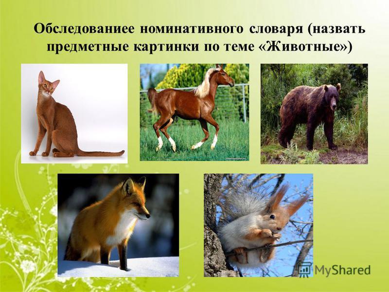 Обследованиее номинативного словаря (назвать предметные картинки по теме «Животные»)