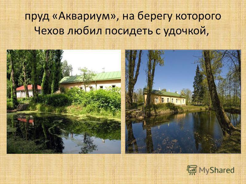 пруд «Аквариум», на берегу которого Чехов любил посидеть с удочкой,