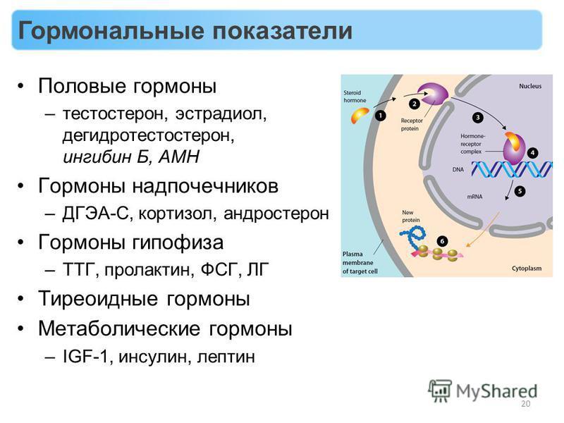 Половые гормоны –тестостерон, эстрадиол, дегидротестостерон, ингибин Б, AMH Гормоны надпочечников –ДГЭА-С, кортизол, андростерон Гормоны гипофиза –ТТГ, пролактин, ФСГ, ЛГ Тиреоидные гормоны Метаболические гормоны –IGF-1, инсулин, лептин 20