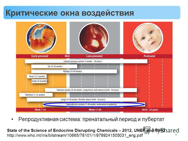 8 Репродуктивная система: пренатальный период и пубертат State of the Science of Endocrine Disrupting Chemicals – 2012, UNEP and WHO http://www.who.int/iris/bitstream/10665/78101/1/9789241505031_eng.pdf