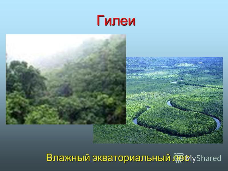 Гилеи Влажный экваториальный лес