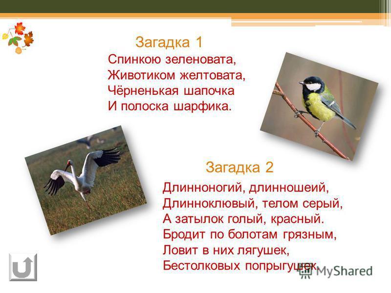 Спинкою зеленовата, Животиком желтовата, Чёрненькая шапочка И полоска шарфика. Длинноногий, длинношеий, Длинноклювый, телом серый, А затылок голый, красный. Бродит по болотам грязным, Ловит в них лягушек, Бестолковых попрыгушек. Загадка 1 Загадка 2