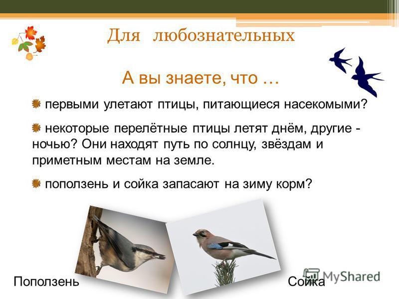 Для любознательных А вы знаете, что … первыми улетают птицы, питающиеся насекомыми? некоторые перелётные птицы летят днём, другие - ночью? Они находят путь по солнцу, звёздам и приметным местам на земле. поползень и сойка запасают на зиму корм? Попол