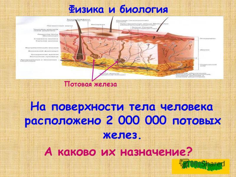 Физика и биология На поверхности тела человека расположено 2 000 000 потовых желез. А каково их назначение? Потовая железа