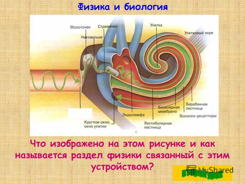 Физика и биология Что изображено на этом рисунке и как называется раздел физики связанный с этим устройством?