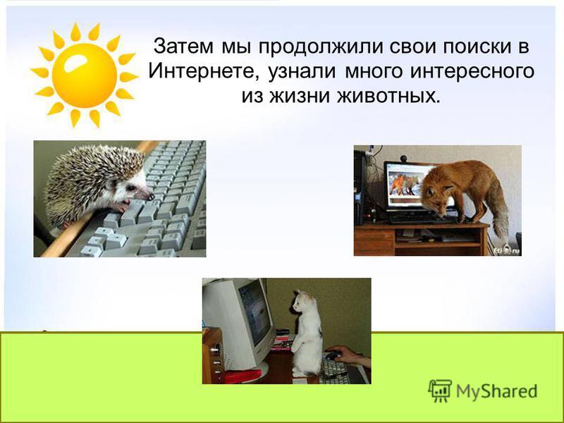 Затем мы продолжили свои поиски в Интернете, узнали много интересного из жизни животных.