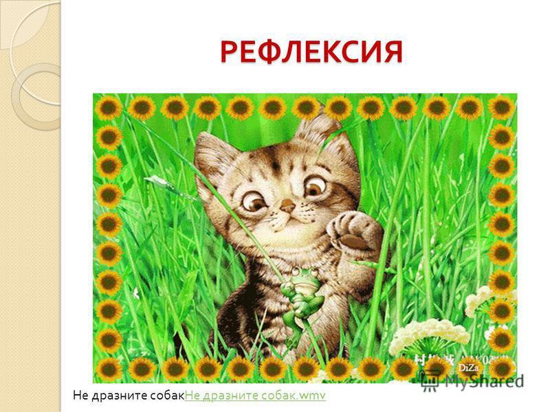 РЕФЛЕКСИЯ Не дразните собак Не дразните собак.wmv Не дразните собак.wmv