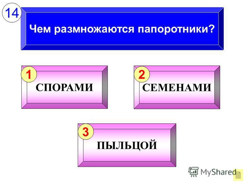 Чем размножаются папоротники? СПОРАМИ 1 СЕМЕНАМИ 2 ПЫЛЬЦОЙ 3 14