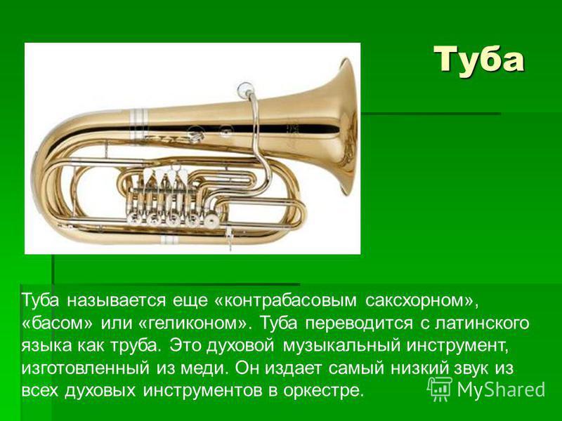 Туба Туба Туба называется еще «контрабасовым саксхорном», «басом» или «геликоном». Туба переводится с латинского языка как труба. Это духовой музыкальный инструмент, изготовленный из меди. Он издает самый низкий звук из всех духовых инструментов в ор