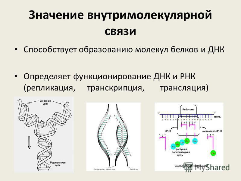Значение внутримолекулярной связи Способствует образованию молекул белков и ДНК Определяет функционирование ДНК и РНК (репликация, транскрипция, трансляция)