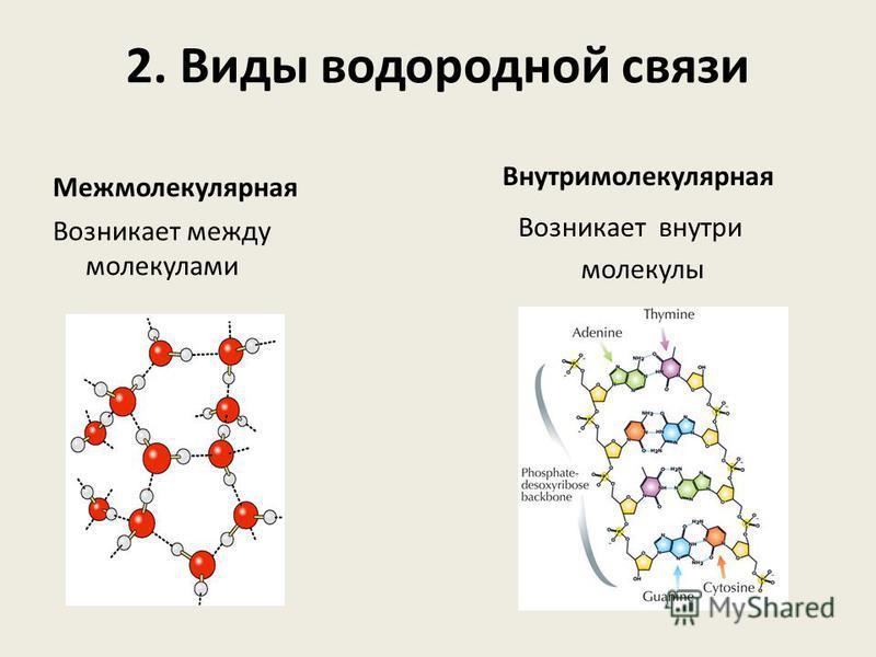 2. Виды водородной связи Межмолекулярная Возникает между молекулами Внутримолекулярная Возникает внутри молекулы