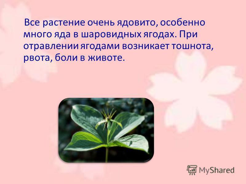 Все растение очень ядовито, особенно много яда в шаровидных ягодах. При отравлении ягодами возникает тошнота, рвота, боли в животе.