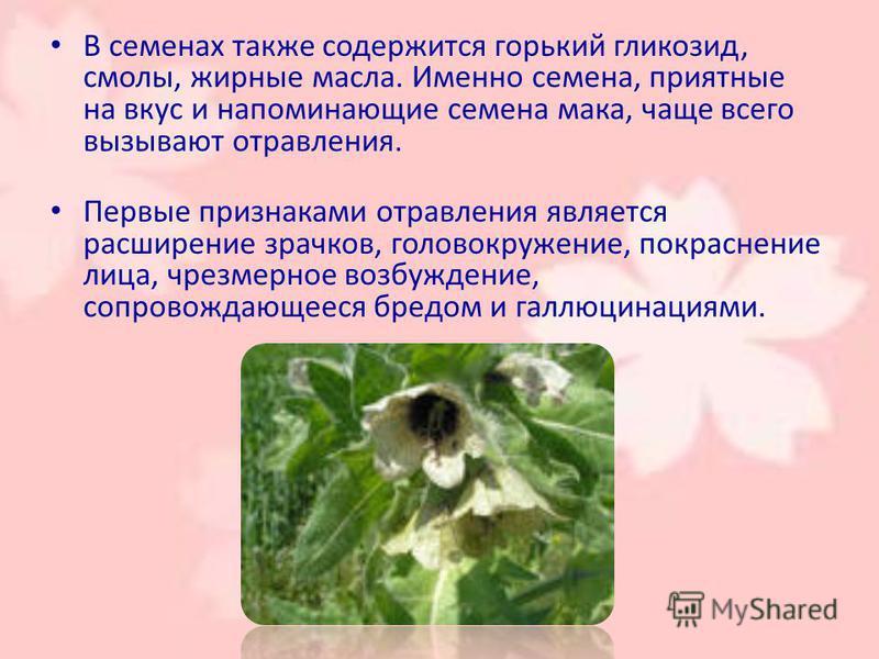 В семенах также содержится горький гликозид, смолы, жирные масла. Именно семена, приятные на вкус и напоминающие семена мака, чаще всего вызывают отравления. Первые признаками отравления является расширение зрачков, головокружение, покраснение лица,