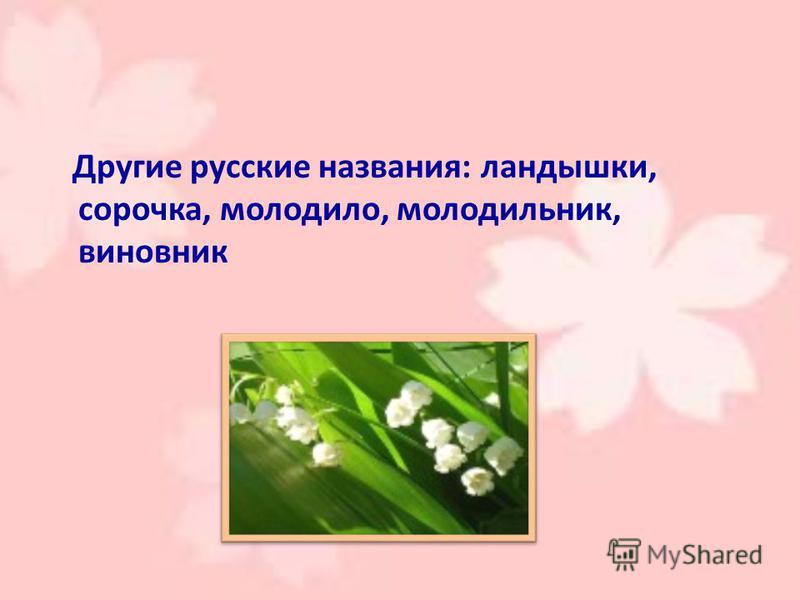 Другие русские названия: ландышки, сорочка, молодило, холодильник, виновник