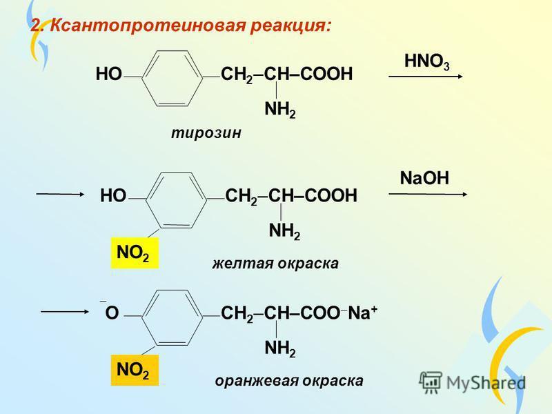 2. Ксантопротеиновая реакция: НОСН 2 –CH–СООH NH 2 НОСН 2 –CH–СООH NH 2 ОСН 2 –CH–СОО Na + NH 2 тирозин желтая окраска НNO 3 NaОН NO2NO2 NO2NO2 оранжевая окраска