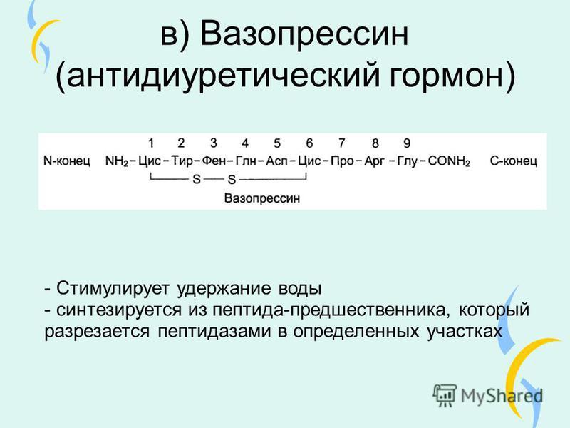 в) Вазопрессин (антидиуретический гормон) - Стимулирует удержание воды - синтезируется из пептида-предшественника, который разрезается пептидазами в определенных участках
