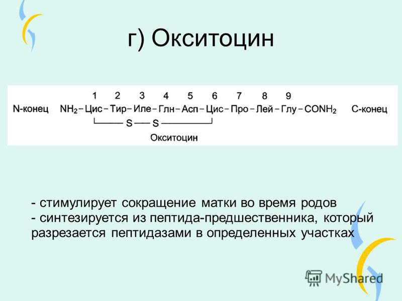 г) Окситоцин - стимулирует сокращение матки во время родов - синтезируется из пептида-предшественника, который разрезается пептидазами в определенных участках