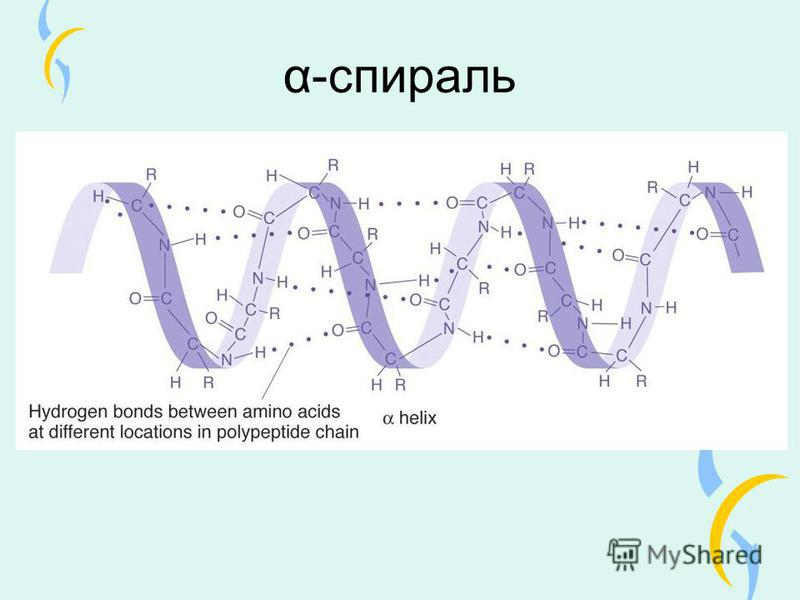 α-спираль