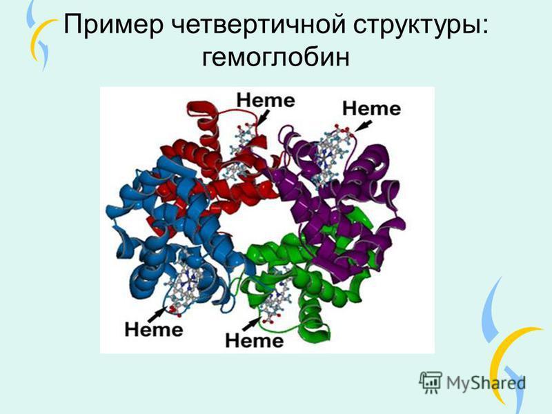 Пример четвертичной структуры: гемоглобин