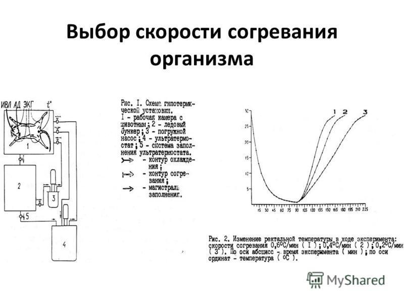 Выбор скорости согревания организма