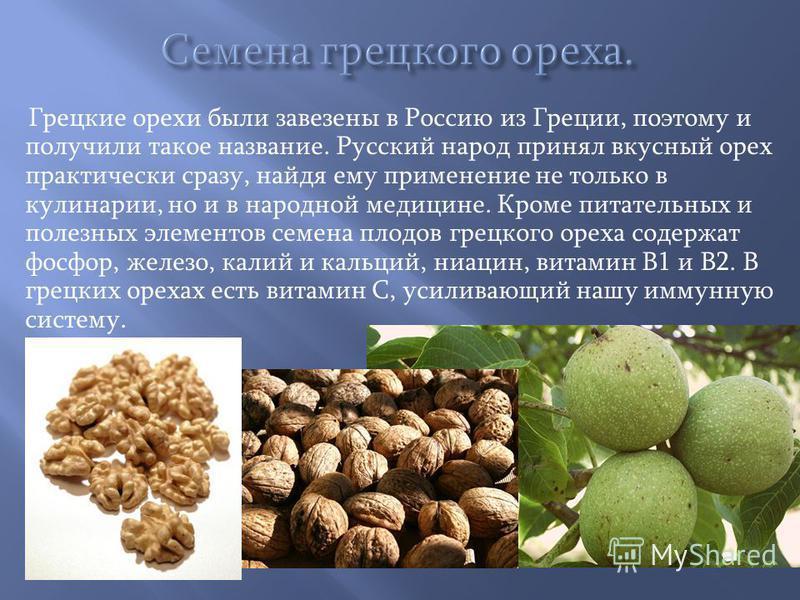 Грецкие орехи были завезены в Россию из Греции, поэтому и получили такое название. Русский народ принял вкусный орех практически сразу, найдя ему применение не только в кулинарии, но и в народной медицине. Кроме питательных и полезных элементов семен