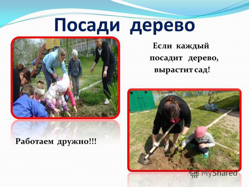 Посади дерево Если каждый посадит дерево, вырастит сад! Работаем дружно!!!