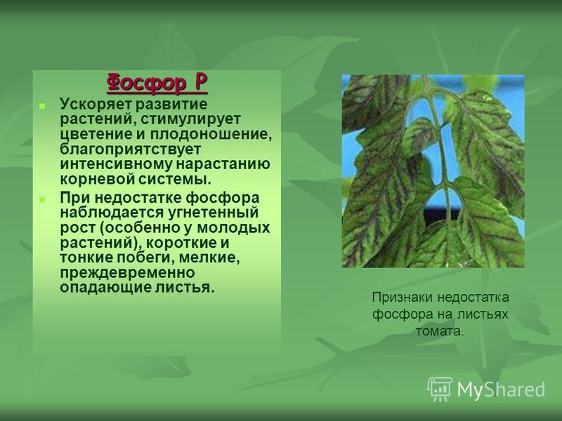 Фосфор Р Ускоряет развитие растений, стимулирует цветение и плодоношение, благоприятствует интенсивному нарастанию корневой системы. При недостатке фосфора наблюдается угнетенный рост (особенно у молодых растений), короткие и тонкие побеги, мелкие, п
