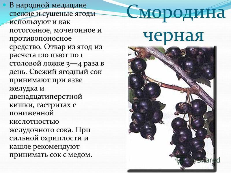 Смородина черная В народной медицине свежие и сушеные ягоды используют и как потогонное, мочегонное и противопоносное средство. Отвар из ягод из расчета 1:10 пьют по 1 столовой ложке 34 раза в день. Свежий ягодный сок принимают при язве желудка и две