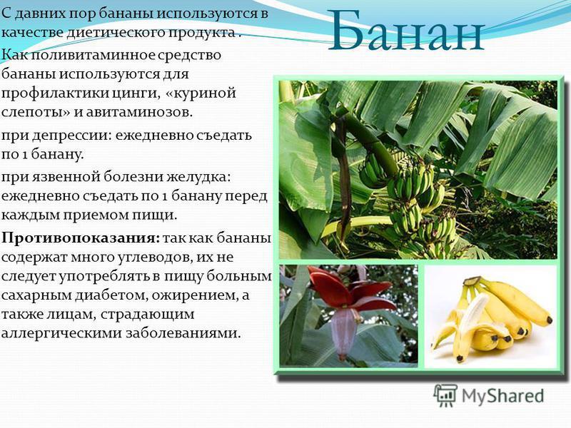 Банан С давних пор бананы используются в качестве диетического продукта. Как поливитаминное средство бананы используются для профилактики цинги, «куриной слепоты» и авитаминозов. при депрессии: ежедневно съедать по 1 банану. при язвенной болезни желу