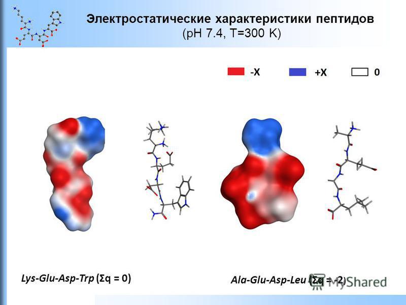 Электростатические характеристики пептидов (pH 7.4, T=300 K) Ala-Glu-Asp-Leu (Ʃq = -2 ) Lys-Glu-Asp-Trp (Ʃq = 0)