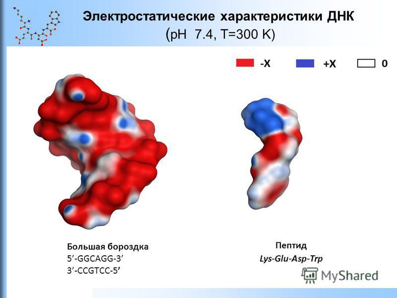 Электростатические характеристики ДНК ( pH 7.4, T=300 K) Большая бороздка 5-GGCAGG-3 3-CCGTCC-5 Пептид Lys-Glu-Asp-Trp