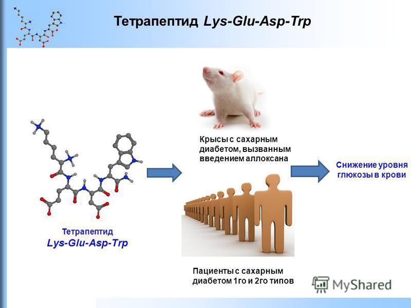 Тетрапептид Lys-Glu-Asp-Trp Снижение уровня глюкозы в крови Тетрапептид Lys-Glu-Asp-Trp Крысы с сахарным диабетом, вызванным введением аллоксана Пациенты с сахарным диабетом 1 го и 2 го типов