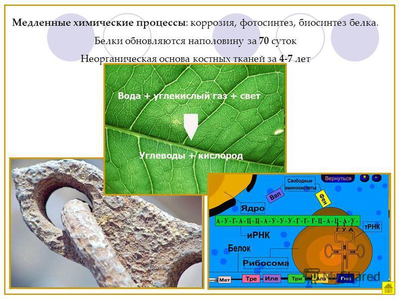 Медленные химические процессы: коррозия, фотосинтез, биосинтез белка. Белки обновляются наполовину за 70 суток Неорганическая основа костных тканей за 4-7 лет