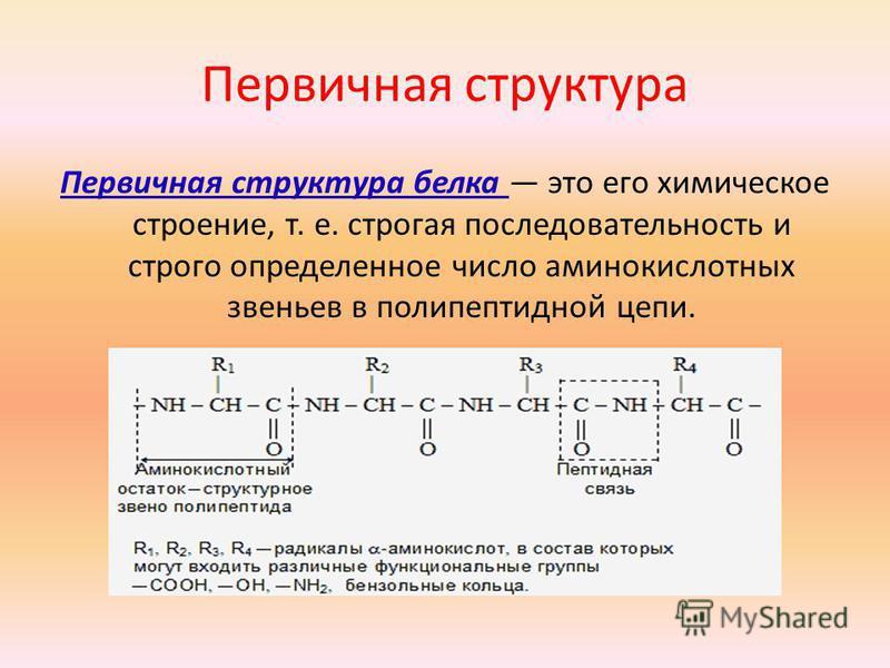 Первичная структура Первичная структура белка это его химическое строение, т. е. строгая последовательность и строго определенное число аминокислотных звеньев в полипептидной цепи.