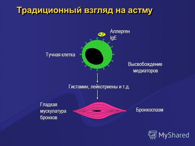 Традиционный взгляд на астму Аллерген IgE Тучная клетка Гистамин, лейкотриены и т.д. Гладкая мускулатура бронхов Бронхоспазм Высвобождение медиаторов