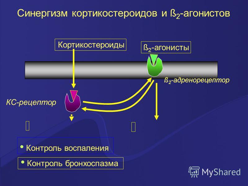 Синергизм кортикостероидов и ß 2 -агонистов ß 2 -адренорецептор Контроль воспаления Кортикостероиды Контроль бронхоспазма ß 2 -агонисты КС-рецептор
