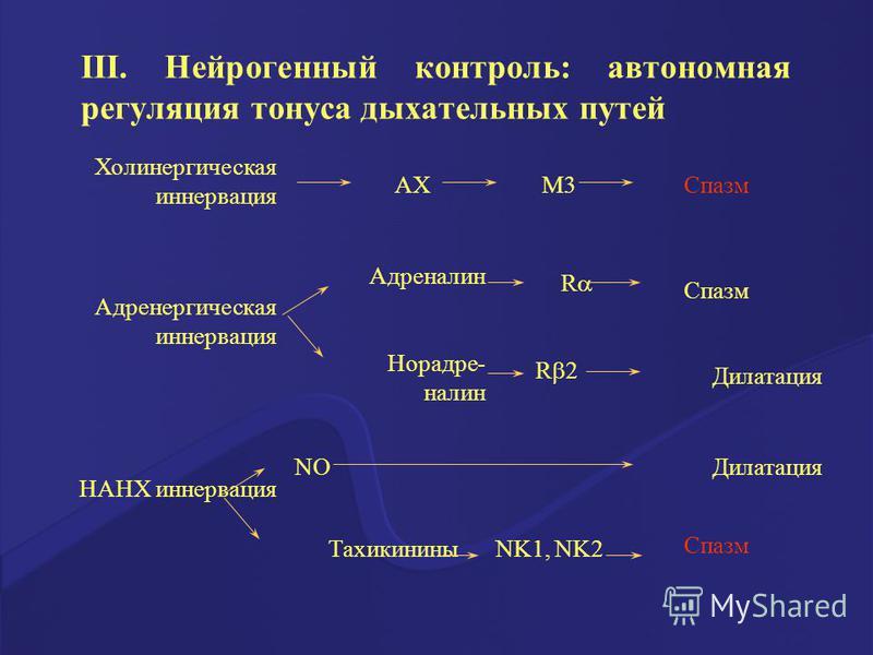 III. Нейрогенный контроль: автономная регуляция тонуса дыхательных путей Холинергическая иннервация АХМ3Спазм Адренергическая иннервация Адреналин Норадре- налин R R 2 Спазм Дилатация НАНХ иннервация NO ТахикининыNK1, NK2 Дилатация Спазм