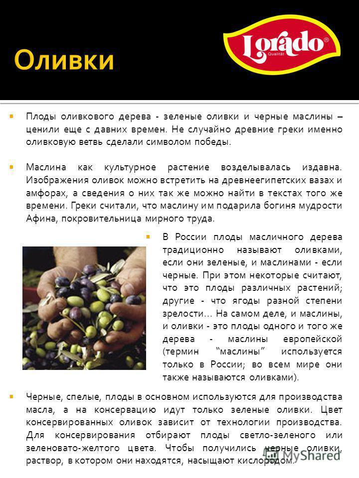 Плоды оливкового дерева - зеленые оливки и черные маслины – ценили еще с давних времен. Не случайно древние греки именно оливковую ветвь сделали символом победы. Маслина как культурное растение возделывалась издавна. Изображения оливок можно встретит