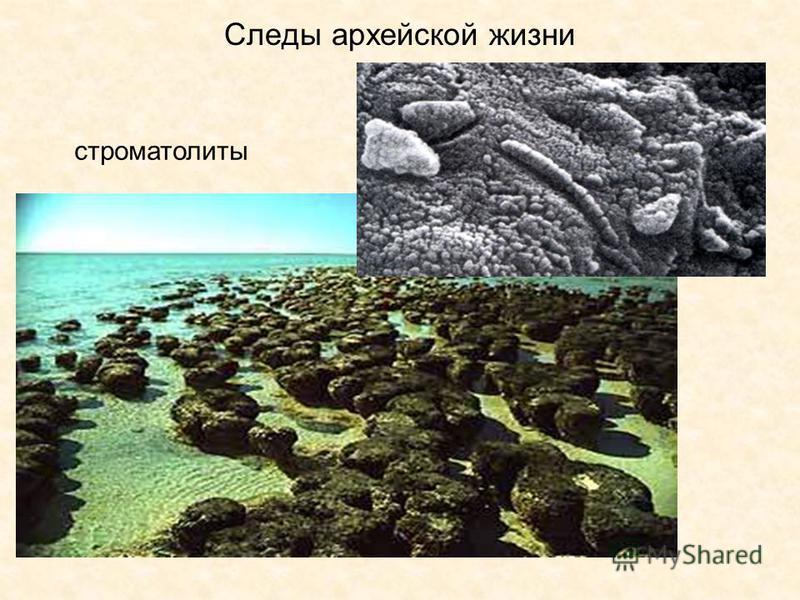 Следы архейской жизни строматолиты
