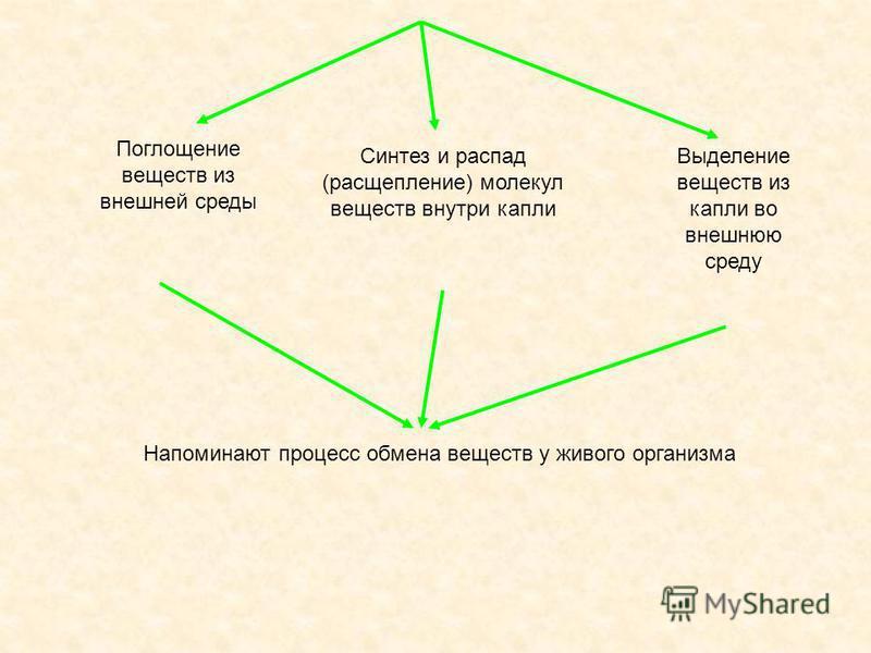 Поглощение веществ из внешней среды Синтез и распад (расщепление) молекул веществ внутри капли Выделение веществ из капли во внешнюю среду Напоминают процесс обмена веществ у живого организма