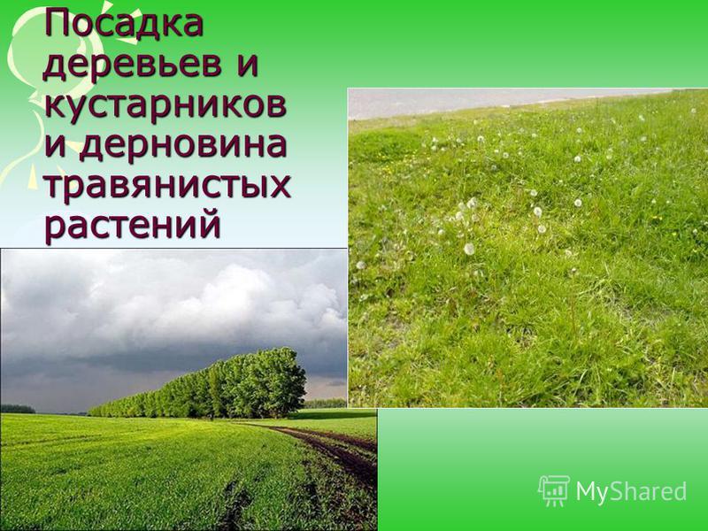 Посадка деревьев и кустарников и дерновина травянистых растений