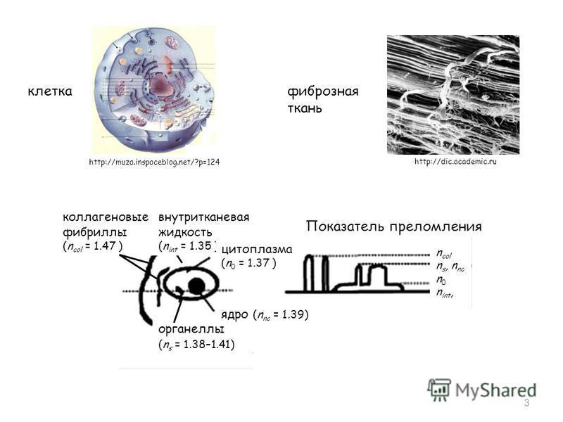 3 коллагеновые фибриллы (n col = 1.47 ) органеллы (n s = 1.38–1.41) внутритканевая жидкость (n int = 1.35 ) цитоплазма (n 0 = 1.37 ) Показатель преломления n col n s, n nc n 0 n int, ядро (n nc = 1.39) клетка http://muza.inspaceblog.net/?p=124 фиброз
