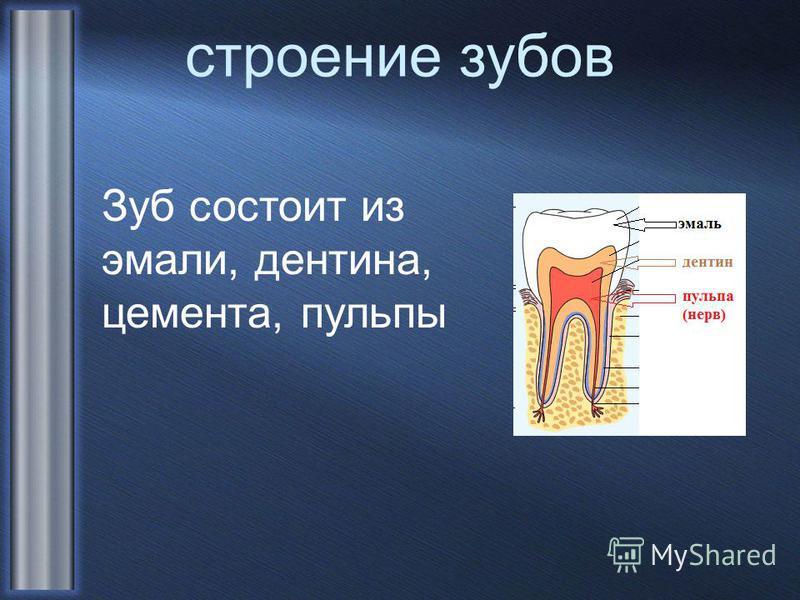 строение зубов Зуб состоит из эмали, дентина, цемента, пульпы