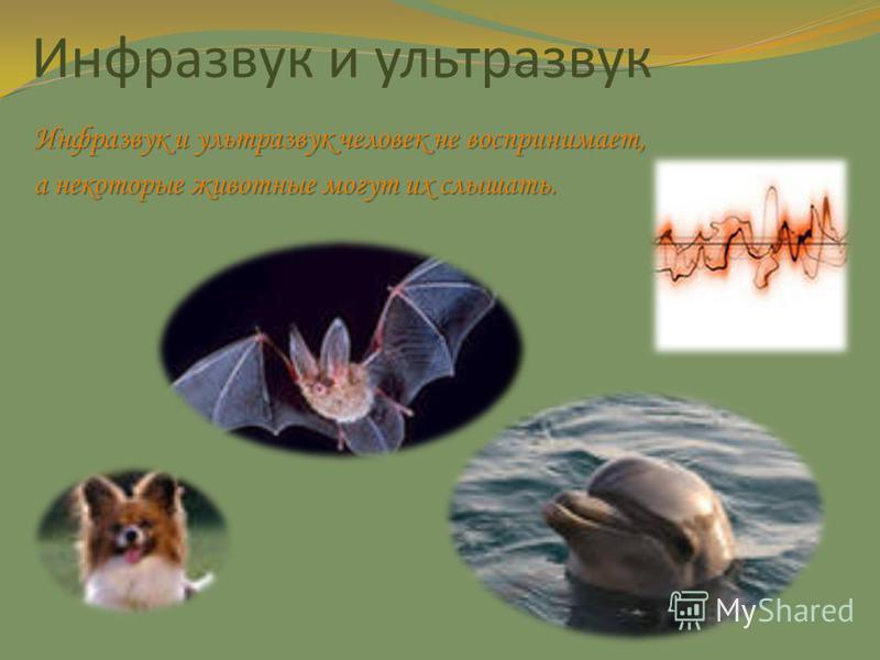 Инфразвук и ультразвук Инфразвук и ультразвук человек не воспринимает, а некоторые животные могут их слышать.