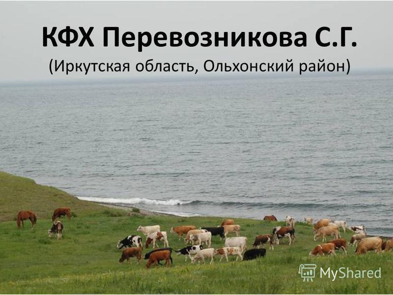 КФХ Перевозникова С.Г. (Иркутская область, Ольхонский район)
