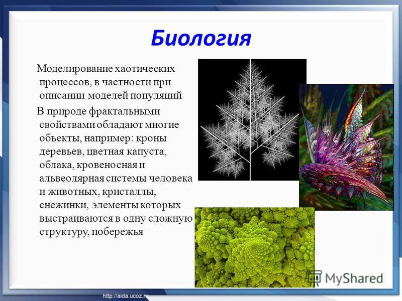 Биология Моделирование хаотических процессов, в частности при описании моделей популяций В природе фрактальными свойствами обладают многие объекты, например: кроны деревьев, цветная капуста, облака, кровеносная и альвеолярная системы человека и живот