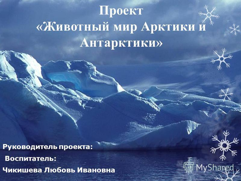 Проект «Животный мир Арктики и Антарктики» Руководитель проекта: Воспитатель: Чикишева Любовь Ивановна