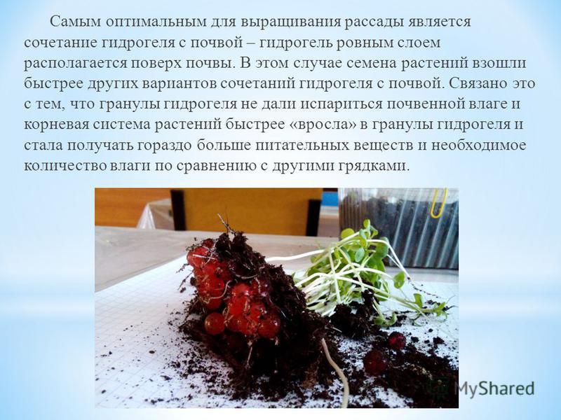 Самым оптимальным для выращивания рассады является сочетание гидрогеля с почвой – гидрогель ровным слоем располагается поверх почвы. В этом случае семена растений взошли быстрее других вариантов сочетаний гидрогеля с почвой. Связано это с тем, что гр